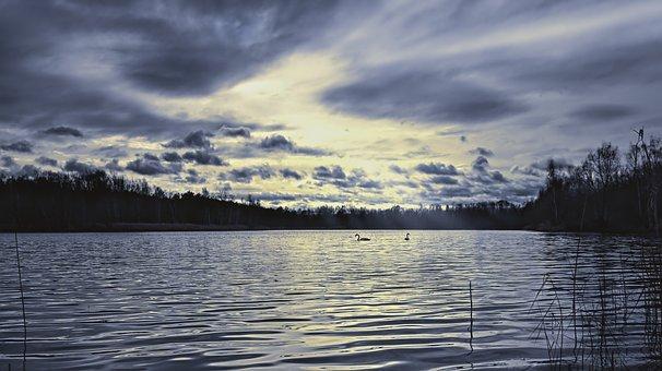 Lake, Swans, Swan Pair, Waters, Nature