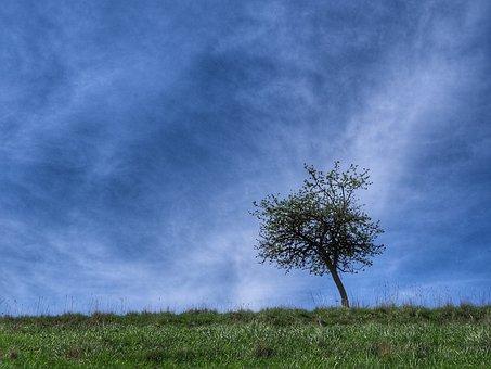 Tree, Meadow, Horizon, Clouds, Green