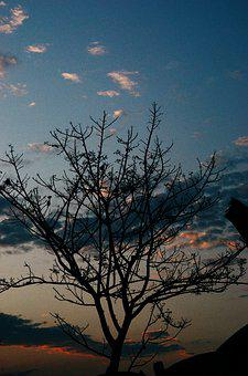 Tree, Sky, Dusk, Sunset, Vintage, Cloud, Blue, White