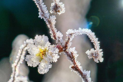 Eiskristalle, Blossom, Bloom, Frost, Frozen, Winter