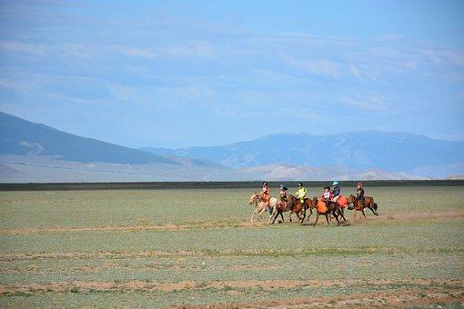 Horses, Ridding, Racing, Animal