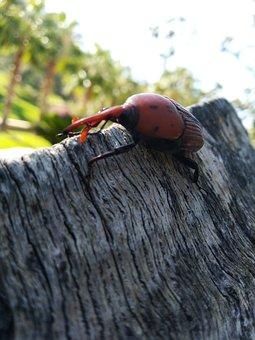 Tree, Beetle, Insect, Nature, Bark, Macro