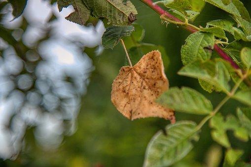 Autumn, Leaves, Leaf, Favor, Brown