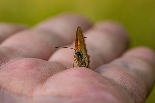 Butterfly, Hand, Ease, Human, Happy