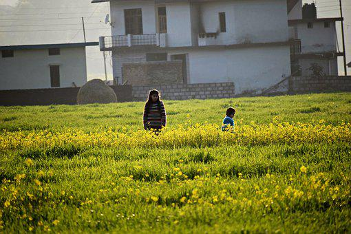 Mustard Field, Flowers, Yellow, Colorful, Nature