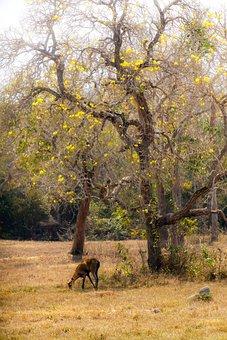 Pantanal, Deer, Marsh, Tree, Yellow