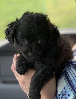 Puppy, 4 Weeks, Dog Easter, Dog