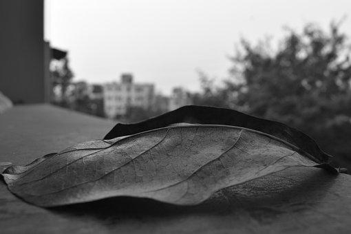 Leaf, Nature, Natural, Environment, Leaves, Life, Fall