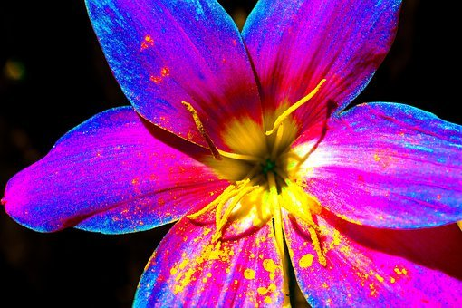 Flower, Chromatic, Colorful, Artificial, Pollen