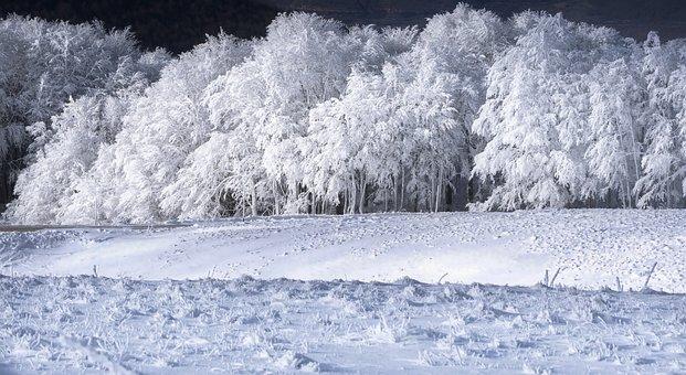 Winter, Snow, Cold, Nature, Landscape, White, Frost