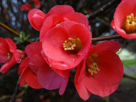 Flowers, Flowering, Color, Rosa, Fuchsia