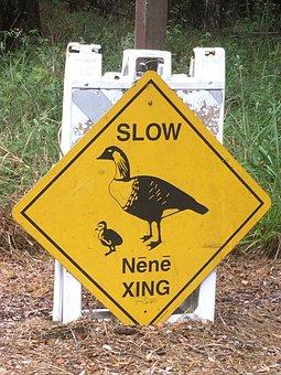 Nene, Sign, Volcanoes National Park, Hawaii