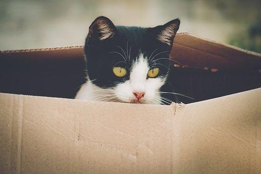 Cat, Feline, Tiger, Mammal, Kitten