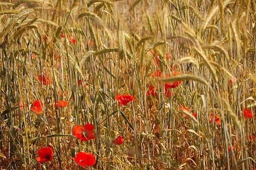 Summer, Nature, Seasons, Flower, Landscape, Meadow