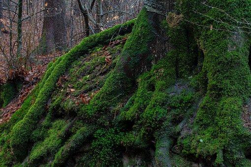 Moss, Moist, Forest, Nature, Green, Plant, Landscape