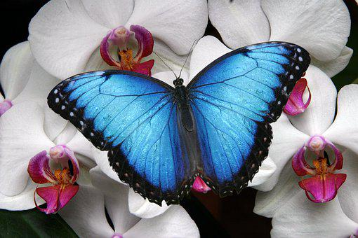 Nature, Butterfly, Colorful, Earth Day