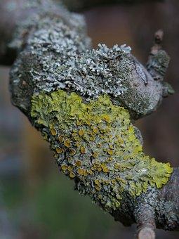 Weave, Mushrooms, Seaweed, Creature, Organisms, Nature