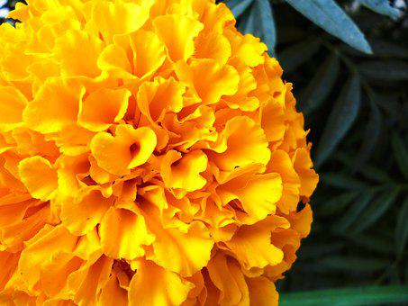 Flower, Yellow, Orange, Garden, Color, Water, Nature