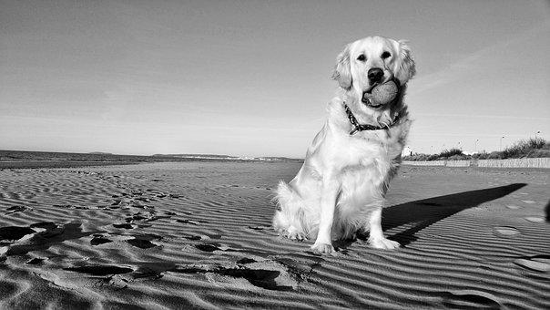 Black And White, Beach, Dog, Sand, Sea