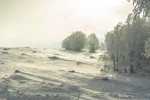 Winter, Snow, Cold, Nature, Landscape