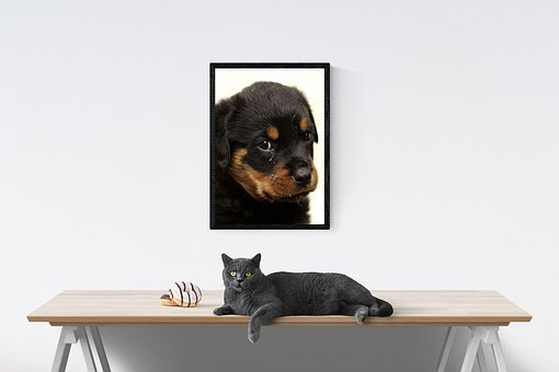 Cat, Dog, Tears, Portrait, Table, Puppy