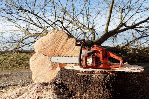Chainsaw, Tree, Tree Pruning, Forestry Work, Saw, Cases