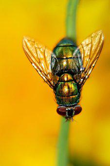 Fly, Macro, Insect, Animal