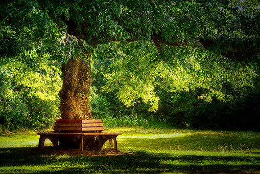 Rest, Bank, Tree, Break, Deciduous Tree, Relaxation