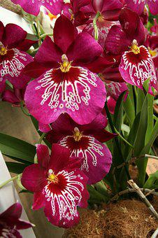 Orchids, Rarity, Exotic, The Exotic