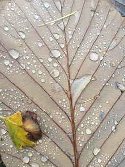 Leaf, Autumn, Leaves, Fall Foliage, Fall Leaves, Nature