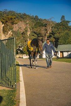 Horse, Equestrian, Farm, Horses, Horse Race