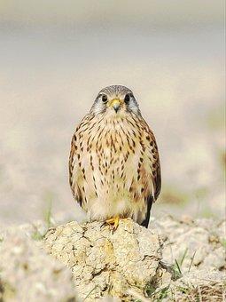 Bird, Sitting, On, Field, Bangladesh