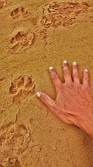 Tracking, Hunter, Footprint, Paws, Hand, Sand, Dog