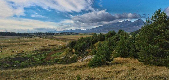Slovakia, Field, Nature, Wild, Plants, Plains, Grass