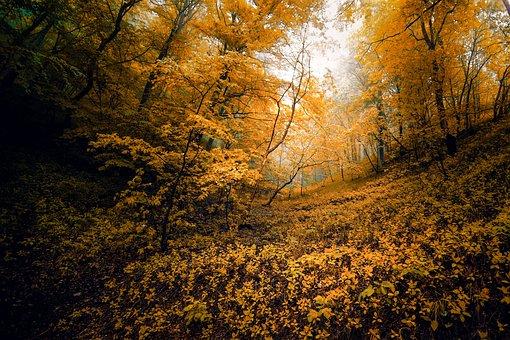 Yellow, Fall, Autumn, Orange, Color, Leaf, September