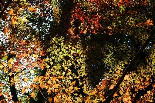 Natural, Plant, Wood, Leaf
