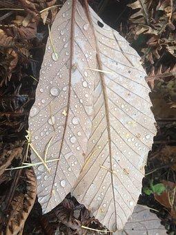 Leaves, Autumn, Fall Foliage, Fall Leaves, Nature