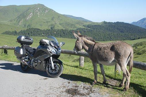 Nature, Moto, Donkey, Meeting, Fun, Funny, Yamaha