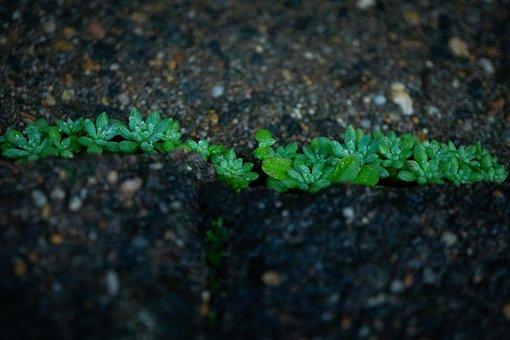 Succulent, Pavement, Plant, Crack In The Concrete