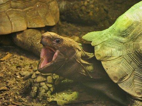 Turtle, Reptile, Nature, Animals