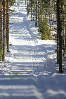 Ski, Ski Tracks, Forest, Winter, Finland