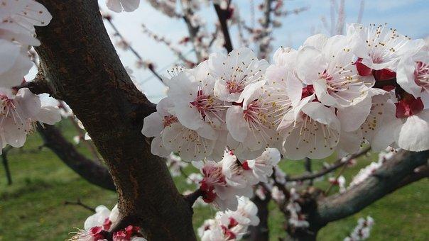 Spring, Flowers, Joy, Beauty, Romantica