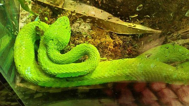 Snake, Green Snake, Reptile, Terrarium