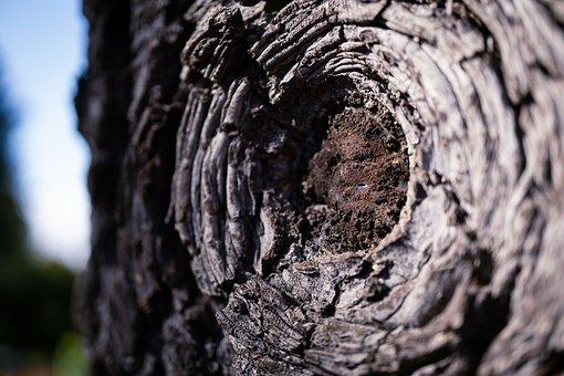 Forest, Macro, Tree Bark, Tree Eye, Eye