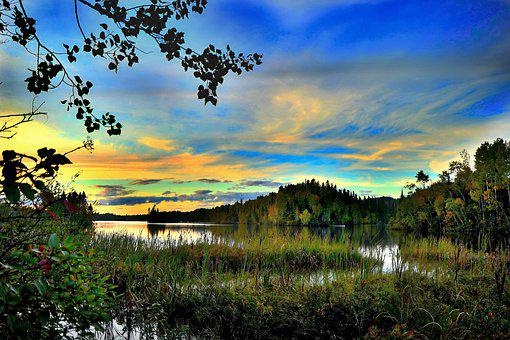 Landscape, Nature, Trees, Marsh, Water, Sky, Colors