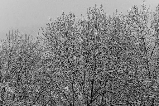 Crown, Winter, Deciduous Tree, Snow, Branches