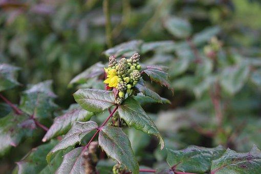 Yellow, Blossom, Bloom, Cheekily, Bush, Plant, Nature