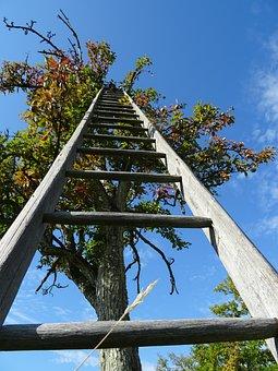 Tree, Head, Sky, Apple Tree, Luck, Career Ladder