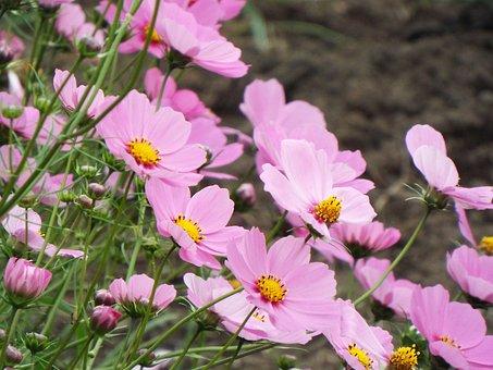 Flowers, Green, Natural, Pink, Landscape, Leaves