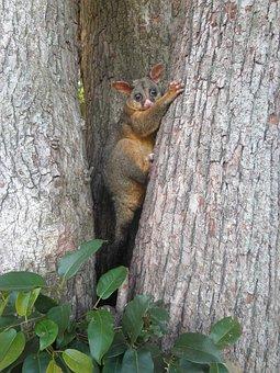 Hello, Possum, Picnic, Tree, Family Home, Nature